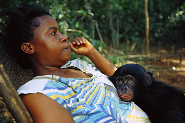 Bonobo (Pan paniscus), orphan with Henrietta, a human adoptive mother, ABC Sanctuary, Democratic Republic of the Congo  -  Cyril Ruoso