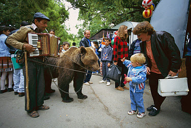 Brown Bear (Ursus arctos) captive animal with owner playing accordion performing on the street for passers-by, Bulgaria  -  Cyril Ruoso