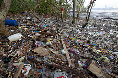 Polluted mangrove forest and beach littered with trash and plastic, Singapore  -  Cyril Ruoso