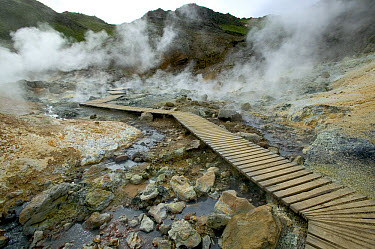 Steam rises up from vents surrounding walkway through hot springs, Iceland  -  Cyril Ruoso