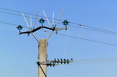 Protection against electrocution, for big birds like vultures, France  -  Cyril Ruoso