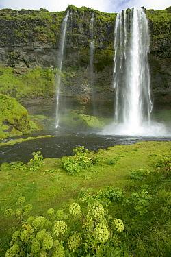 Seljalandsfoss Waterfall cascading 60 meters, Iceland  -  Cyril Ruoso