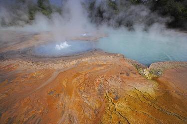 Bacterial mats and hot spring, Bukit Barisan Selatan National Park, Sumatra, Indonesia  -  Cyril Ruoso