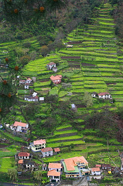 Hillside cillage and terraced fields, Madeira  -  Cyril Ruoso