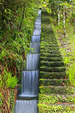 Small artificial canal called levada, part of an ancient irrigation system, flowing through a temperate primary forest called laurisilva, Madeira  -  Cyril Ruoso