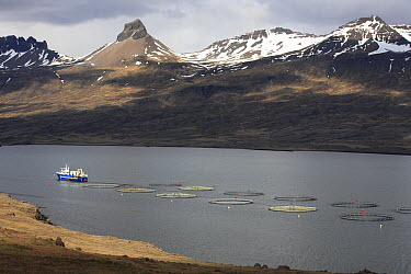 Fish farm in fjord, east Iceland  -  Cyril Ruoso