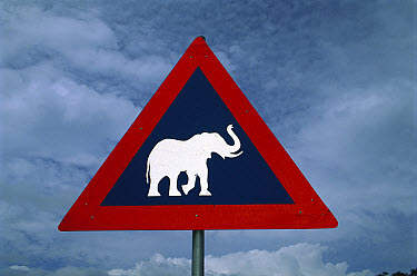 African Elephant (Loxodonta africana) road sign warning drivers of elephants crossing, near Kasane, Botswana  -  Richard Du Toit