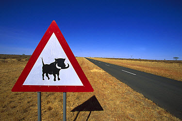 Cape Warthog (Phacochoerus aethiopicus) warning sign along side of main road, Namibia  -  Richard Du Toit