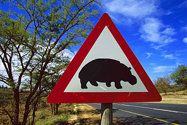 Hippopotamus (Hippopotamus amphibius) warning sign along road near Nelspruit, South Africa  -  Richard Du Toit