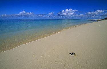 Ghost crab on white coral beach, Desroches Island, Seychelles  -  Richard Du Toit