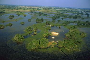 Rainy season flooding, Okavango Delta, Botswana  -  Richard Du Toit