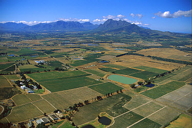 Wine lands near Stellenbosch, South Africa  -  Richard Du Toit