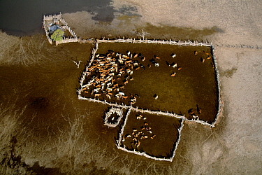 Botswana homestead, cattle kraal, Makgadikgadi Salt Pans, Botswana