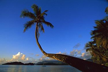 Palm landscape, Saint Anne Resort, Seychelles  -  Richard Du Toit