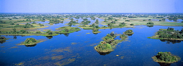 Rainy season aerial view of palm islands in the flooded Okavango Delta, Botswana
