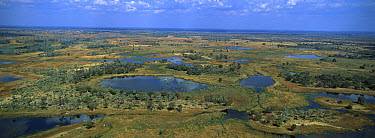 Aerial view of drying floodwaters of the Okavango Delta, Botswana  -  Richard Du Toit