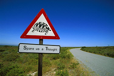 Beware of Tortoise road sign, West Coast National Park, South Africa  -  Richard Du Toit