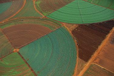 Aerial view of agricultural fields, Gauteng, South Africa  -  Richard Du Toit