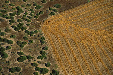 Aerial view of wheat field encroaching on natural habitat, South Africa  -  Richard Du Toit