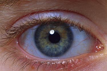 Human (Homo sapiens) detail of a nine year old boy's eye  -  Michael Durham