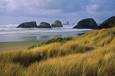 Irregular basalt projections and sea stacks on Cannon Beach, Oregon  -  Michael Durham