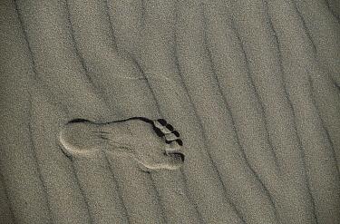 Footprint in beach sand, Oregon coast  -  Michael Durham