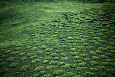 Bunchgrass prairie and mima mounds in spring at the Nature Conservancy Zumwalt Prairie Reserve, Oregon  -  Michael Durham