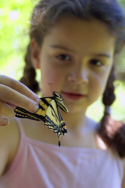 Swallowtail (Papilionidae) butterfly held by eight year old Isabel before release in the coastal mountains of Oregon  -  Michael Durham