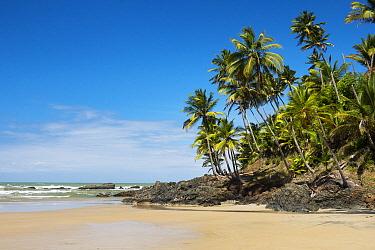 Palms, Havaisinho Beach, Bahia, Brazil