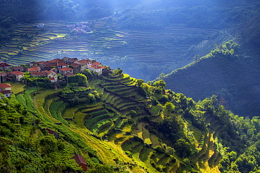 Terraced crops in the Sistelo Region, Peneda-Geres National Park, Portugal