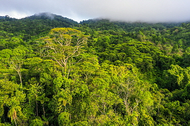 Semi-deciduous tropical moist rainforest canopy, Mamoni Valley, Panama