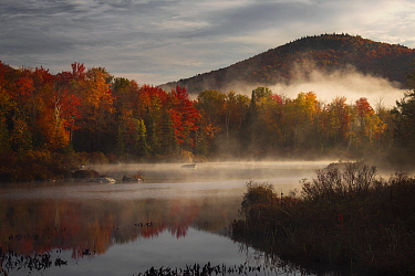 Deciduous forest and pond in autumn at sunrise, Green Mountains, Vermont