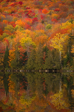 Deciduous forest and pond in autumn, northern Vermont