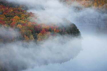 Fog over pond in autumn, northern Vermont