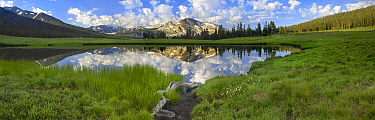 Mountain reflected in pond, Mammoth Peak, Yosemite National Park, California