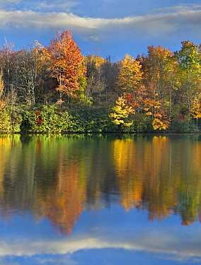 Deciduous forest in autumn, Price Lake, Blue Ridge Parkway, North Carolina