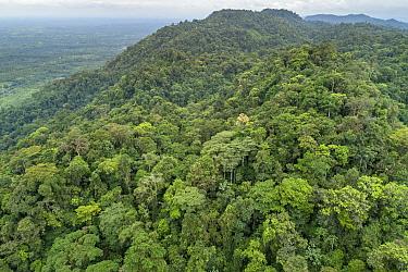 Choco rainforest, Ecuador