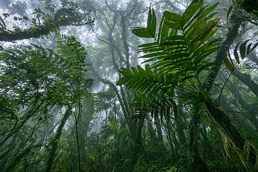 Cloud forest, El Triunfo Biosphere Reserve, Chiapas, Mexico