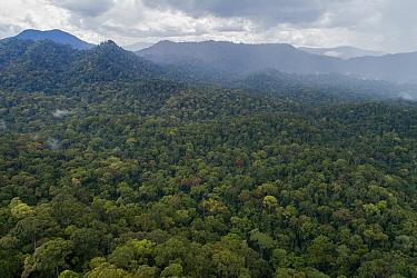 Virgin primary rainforest, Sabah, Borneo, Malaysia