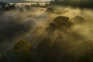 Mist over virgin rainforest at sunrise, Danum Valley Conservation Area, Sabah, Borneo, Malaysia