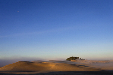 Trees and sand dunes, Oregon Dunes National Recreation Area, Oregon