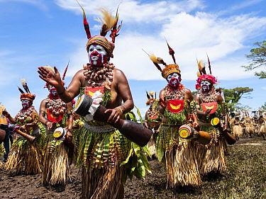 Indigenous Sing Sing people in their traditional costumes, Lae, Papua New Guinea
