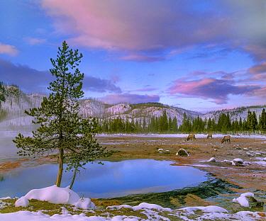 Sapphire Pool, Yellowstone National Park, Wyoming