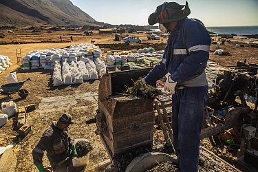 Workers process dried kelp at a regional processing plant near Taltal, Chile
