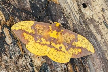 Moth, Huron Meadows Metropark, Michigan