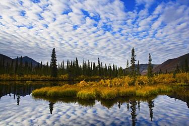 Clouds reflected in lake, Ogilvie Mountains, Yukon, Canada