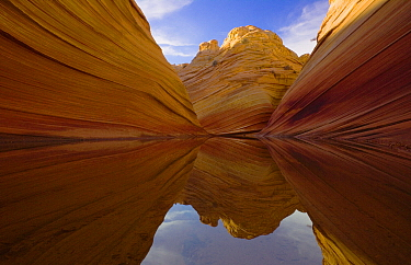 Pool reflecting sandstone cliffs, Paria Canyon, Arizona