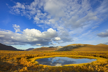 Cumulus clouds over pond and tundra in autumn, Ogilvie Mountains, Dempster Highway, Yukon, Canada