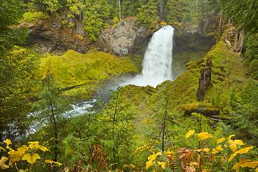 Waterfall in temperate rainforest, Sahalie Falls, McKenzie River, Oregon