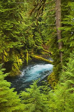 River in temperate rainforest, Sahalie Falls, McKenzie River, Oregon
